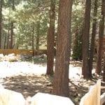 26 Lupin St Backyard